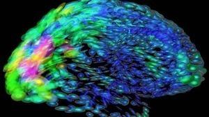 Bottlenecks in the brain limit our ability to multitask   Brain Momentum   Scoop.it
