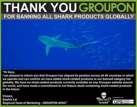 Tweet from @CoveMovie_OPS  ~ thxu #Groupon4BanningSharkProducts globally* | Rescue our Ocean's & it's species from Man's Pollution! | Scoop.it