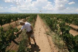 Arizona wine industry boosting ties to University of Arizona | Arizona Daily Star | CALS in the News | Scoop.it