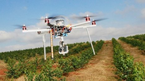 Economie - De l'eucalyptus et des drones pour préserver la forêt amazonienne | Infos Drones | Scoop.it