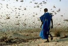 SONS OF MALCOLM: (this is literal) GADAFI HELD BACK THE LOCUSTS WHICH ARE DEVASTATING AFRICA | Saif al Islam | Scoop.it