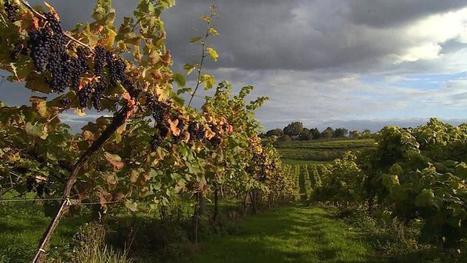 Le vin anglais bientôt meilleur que le vin français | Le vin quotidien | Scoop.it