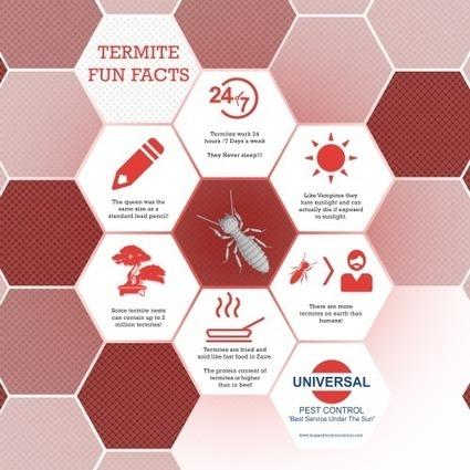 Pest Control | Business | Scoop.it
