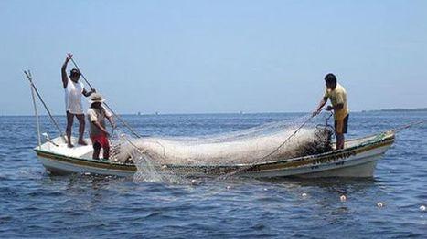 Ofrece Conapesca cursos a 124 pescadores de BC - Baja California | AQUACULTURE IN MEXICO AND WORLD | Scoop.it