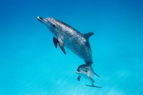 Interview - Le bruit dans l'océan, cétacé !   Raconte-moi la mer   Scoop.it