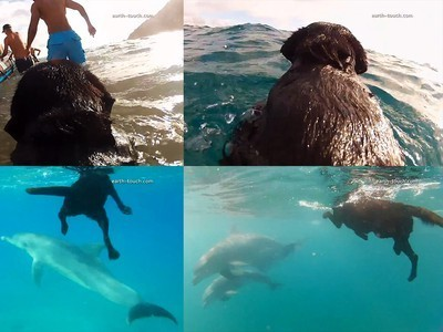 Unusual Friendship Between Kira the Dog and a School of Dolphins! (Video) | All about water, the oceans, environmental issues | Scoop.it