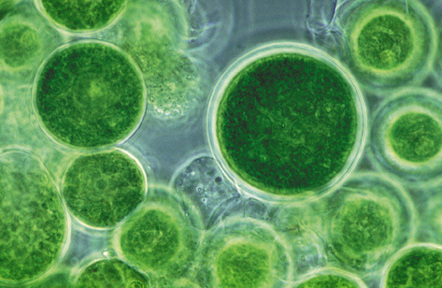 New Cancer Cure uses Nanotechnology: AND cost could be cheap thanks to breakthrough with  Algae | Usal - MediNews | Scoop.it