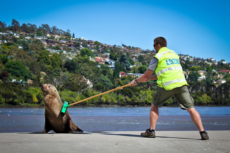 Behind the scenes of my top 3 photos | ABC Open Northern Tasmania | Scoop.it