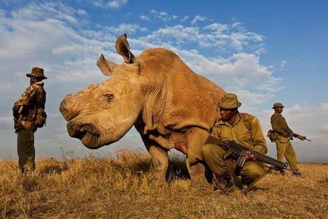 Twitter / traveIing: This rare white rhino has armed ... | Rhino | Scoop.it