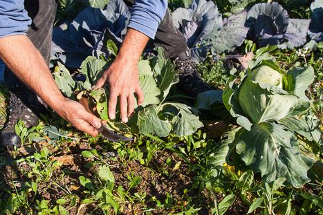 La agricultura campesina y ecológica puede alimentar al mundo (y es la única capaz de hacerlo)   Agricultura   Scoop.it