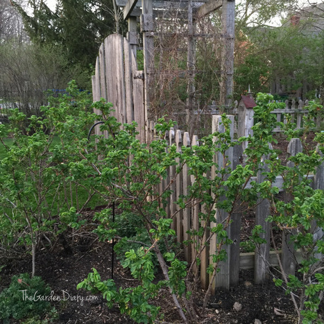 Bloom Thyme: It's Coming Back! | Cottage Gardening | Scoop.it