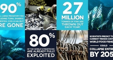 Estimating the Scale of Global of Overfishing » The Daily Catch | Observatory Water® | Scoop.it