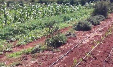 Agroécologie : Terre & Humanisme inaugure à Rhamna une ferme pédagogique - LE MATIN.ma | Chimie verte et agroécologie | Scoop.it