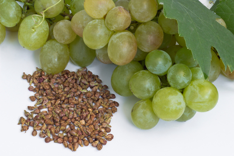 Grape Seed Extract Dosage Recommendations for Cancer, Blood Pressure & More | Nootropics | Scoop.it