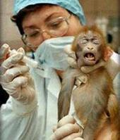 The Argument Against Animal testing | Cosmetic Animal Testing | Banning of Cosmetic Animal Testing | Scoop.it