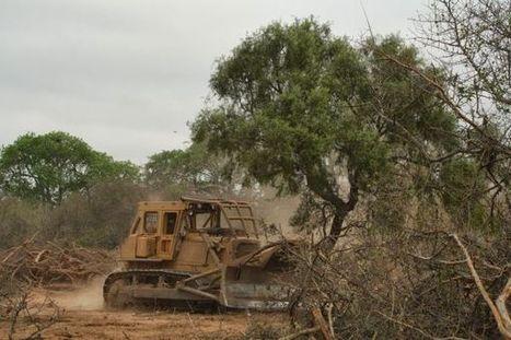 Deforestación en el Chaco Paraguayo | MOVUS | Scoop.it