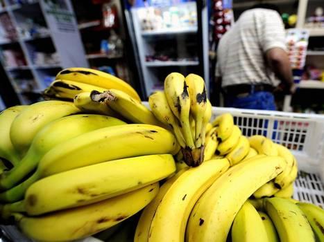 Y a-t-il une grave menace sur la banane ? [en anglais] | EntomoNews | Scoop.it