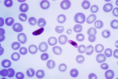 Genetic Sequencing Could Help Contain the Spread of Malaria in South-East Asia | Biosciencia News | Scoop.it