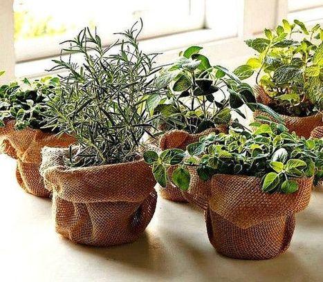 Зачинска башта у прозору | Гајење биља на природан начин | Scoop.it