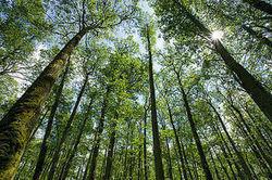 Réchauffement: le faux-semblant des forêts européennes - Journal de l'environnement   Planete DDurable   Scoop.it