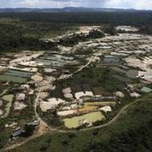 Brésil : nouvelle accélération de la déforestation de l'Amazonie   Planète bleue en alerte rouge   Scoop.it