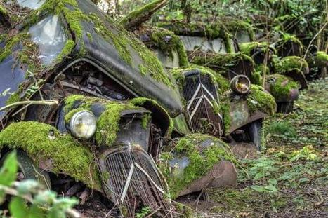 Twitter / AbandonedPics: Abandoned moss-ridden cars ... | Everything about cars | Scoop.it