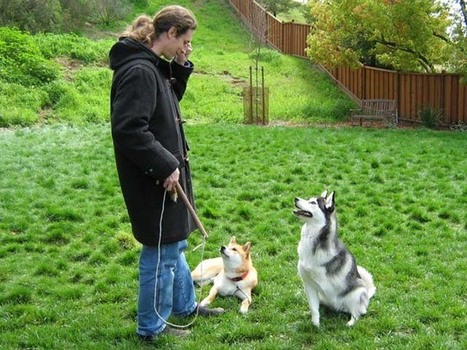 Number of reasons to choose therapy dog training utah - Share Commission | dog grooming utah | Scoop.it