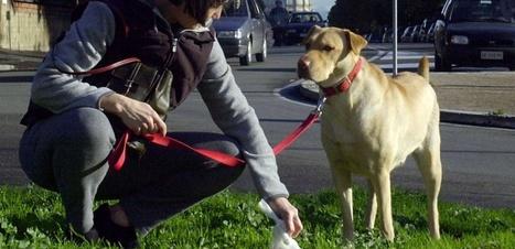 Qui ramasse les crottes de son chien ? | animaux | Scoop.it