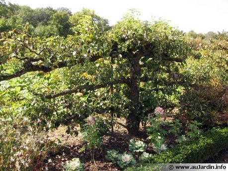 Un verger biologique | Potager Bio & PermaCulture | Scoop.it