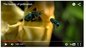 Weekly Hear Opener: The Beauty of Pollination | Eileen Anglin | Our Evolving Earth | Scoop.it