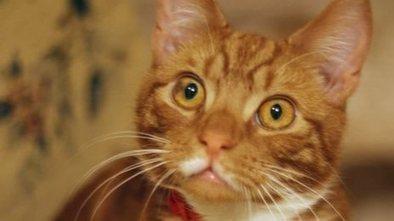 New cat Jock moves to Churchill home | Interesting & Odd Pet Topics | Scoop.it