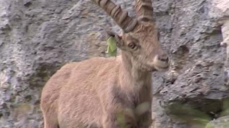 [Video] Le printemps est de retour et la nature s'éveille - Vercors | Biodiversité | Scoop.it
