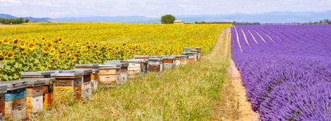 Agro-écologie: les chantiers prioritaires de Stéphane Le Foll pour 2016   Ecosystèmes Tropicaux   Scoop.it