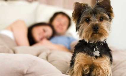 Best Pet Friendly Apartments Available in Dallas | apartmentsrentrebate | Scoop.it