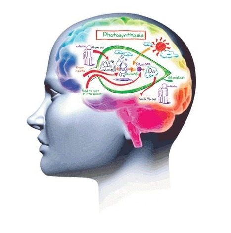 Qu'est-ce que le « Mind Mapping » ? | training ways | Scoop.it