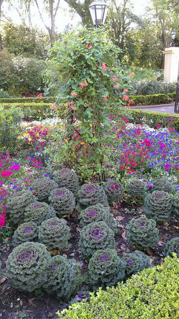 Winter annuals provide a splash of color - Daily Commercial | Gardening is more than Digging the Dirt | Scoop.it