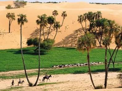 Le réchauffement climatique reverdit le Sahara   Actualités Afrique   Scoop.it