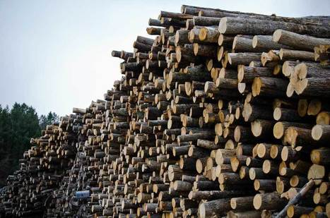 Justices back forestry officials in tax fight with timber company | Timberland Investment | Scoop.it