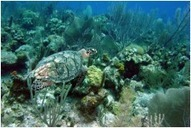New Assessment Finds Management Efforts are Insufficient to Protect Mesoamerican Reef | Belize in Social Media | Scoop.it