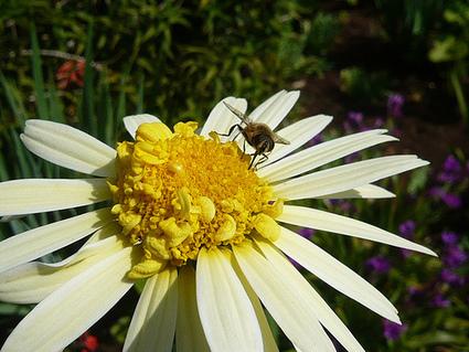 Improving Garden Biodiversity Top Ten Tips | Gardeners Tips | The Glory of the Garden | Scoop.it