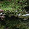 Forest Mycology and Pathology