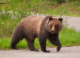 Driver Swerves To Avoid Moose, Hits Bear Instead | READ WHAT I READ | Scoop.it