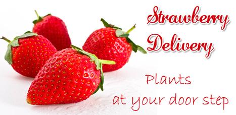 Strawberry Delivery | Annie Haven | Haven Brand | Scoop.it