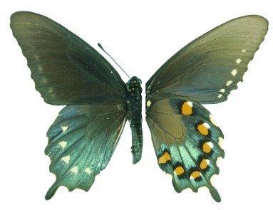 Banque d'espèces - Système canadien d'information sur la biodiversité | Insect Archive | Scoop.it