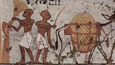 El curioso remedio de los antiguos egipcios para combatir la resaca | Mundo Clásico | Scoop.it