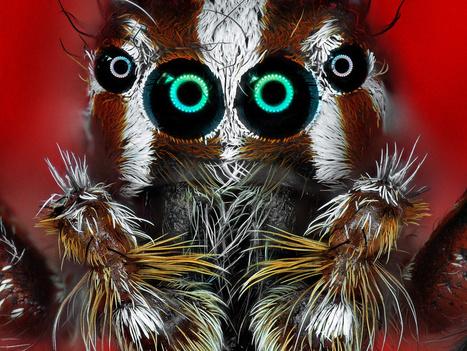 Madagascar. Exposition : « Le peuple caché » s'illustre au pays   Variétés entomologiques   Scoop.it