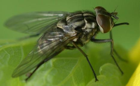 De nouvelles stratégies pour la gestion des insectes ravageurs dans l'agriculture | Veille Scientifique Agroalimentaire - Agronomie | Scoop.it