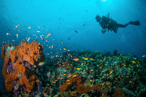 7 Reasons You Need To Try Diving - Scuba Diver Life | DiverSync | Scoop.it