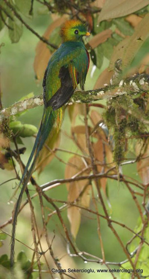 Birders beware: climate change could push 600 tropical birds into extinction | Climate change challenges | Scoop.it