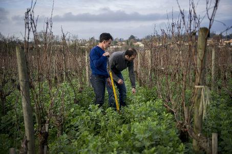Le vignoble bordelais veut réduire son empreinte carbone | Géographie : les dernières nouvelles de la toile. | Scoop.it